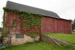 Red barn with plants on side.